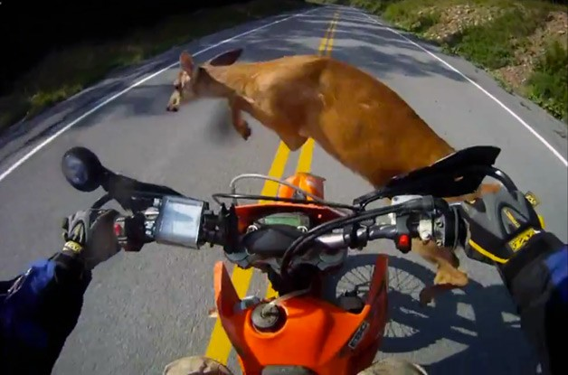 Motorcyclist hits deer