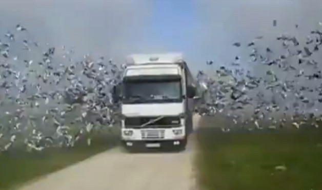 This Volvo lorry is for a birds… literally