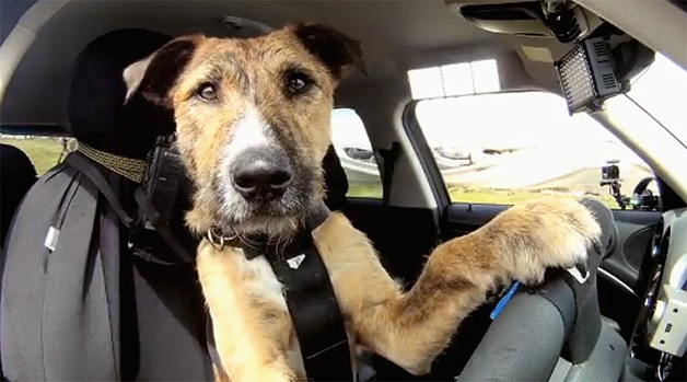 New Zealand SPCA teaches rescue dogs how to expostulate the Mini