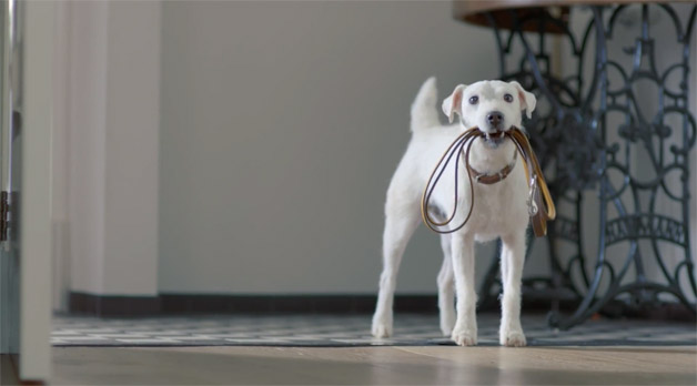 Volkswagen Golf dog ad - oveseas - screencap