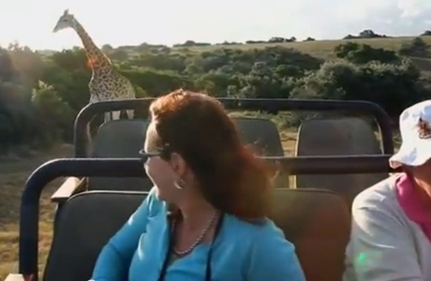 Angry giraffe chases safari-goers in an open-top truck - video screencap