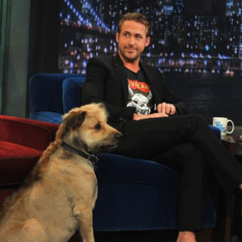 Ryan Gosling's Dog Insists on Having a Mohawk