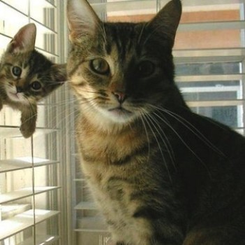 Photobombing Feline: Cutest Kitten Ever Steals Cool Cat's Spotlight!