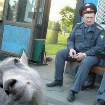 Photobombing Pet Pals: Funny Goat Interrupts The Military!