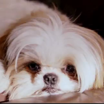 Seven Psychopaths: 7 Reasons to See It...and a Shih Tzu Is One (MOVIE TRAILER MADNESS)!