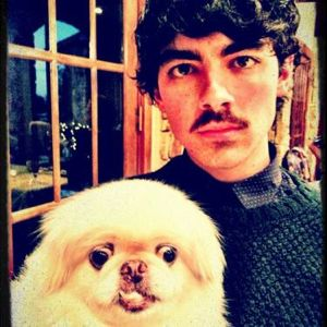 jonas brothers, jonas brothers thanksgiving, jonas brothers golf, joe jonas, jonas brothers news, joe jonas mustache, jonas brothers photos, jonas brothers pics