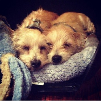 Which Actress Just Adopted These Two Precious Pooches?