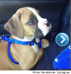 Khloe Kardashians instagram photo of her new puppy, Bernard Hopkins.