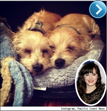 Zooey Deschanel's Instagram pic of her new rescued puppies.