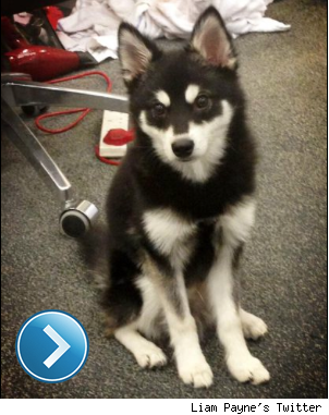 Liam Payne's Twitter pic of his dog, Loki.