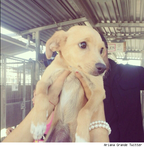 Ariana Grande new dog rescue Toulouse puppy