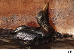 bird in oil spill