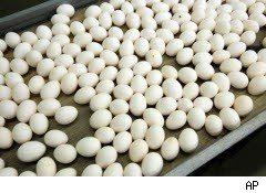 Eggs ready for sorting
