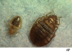 Bed Bug, Bed Bug control and prevention