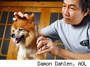 pet groomer with dog - how much to tip