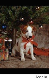puppy - affordable pets for the holiday