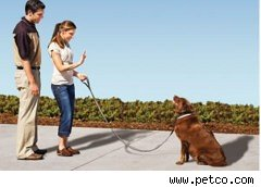 Dog being trained