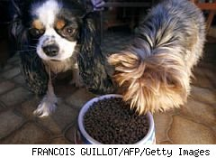 dog food cat food best pet food