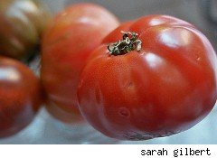 tomatoes - grocery prices