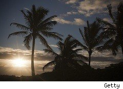 palm trees at dusk - Hawaiian tourism