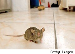 The cheap way to catch a mouse in your house