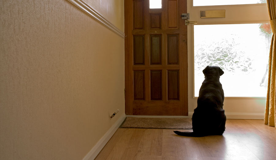 Dog waiting for her owner. If only there was a toy with motion recognition.