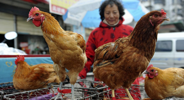 kfc sales bird flu outbreak china