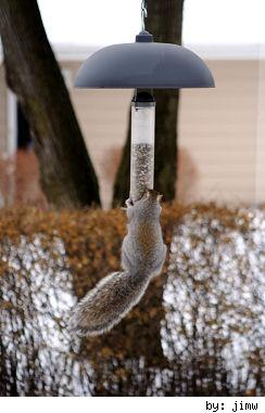 bird feeder bandit