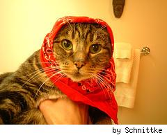 kitty wearing a red bandana