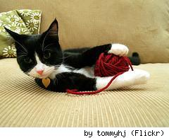 Don't let this cat get your yarn. By Flickr user tommyhj.