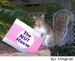 squirrel holding card
