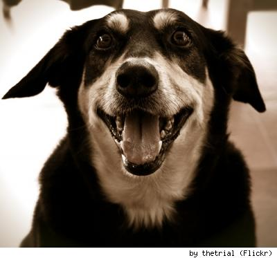 Really adorable happy doggie named Sierra! by Flickr user thetrial.