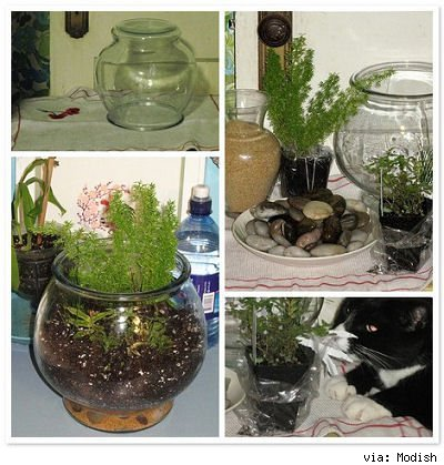 glass jars, stones and plants for a terrarium