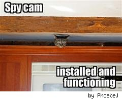 spy cam LOLcats by Phoebe J on Flickr
