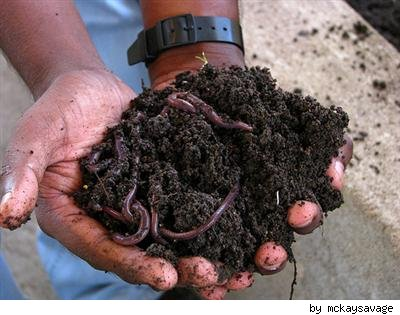 worm bin compost by mckaysavage on Flickr