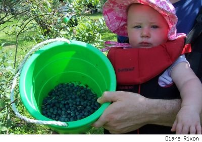Baby in an orchard next to a green plastic bucket with rope handle partially filled with blueberries.