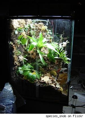 Vivarium Plans http://www.diylife.com/photos/terrarium-ideas-for-inspiration/935243/