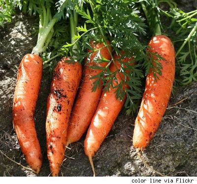 carrots in the dirt