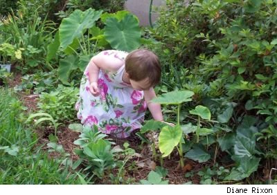 Two-year-old girl wearing floral halter-neck dress crouches in a garden to examine plants