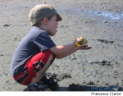boy digging for seashells at the beach