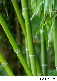 green, bamboo, eco