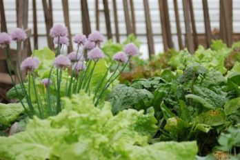Raised garden with spinach, lettuce and onion chives, source: Flickr.