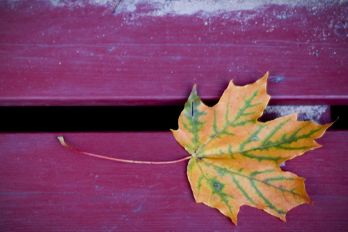 Autumn leaf on a park bench, Flickr