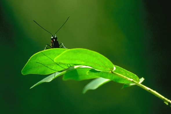 get rid of aphids naturally in your garden. Black Bedroom Furniture Sets. Home Design Ideas
