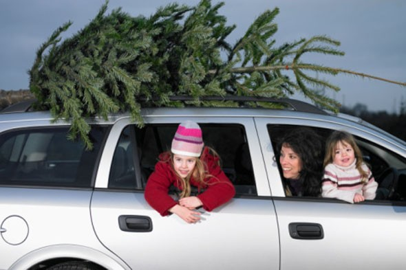 live christmas trees, christmas tree care