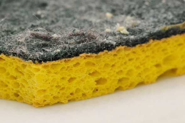 dirty sponge, dishcloths, disinfect your kitchen
