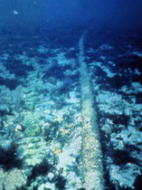 Undersea cable