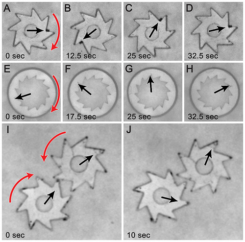 Bacteria taught to spin microscopic gears right round, could make for better solar panels