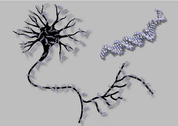 Neuron and DNA