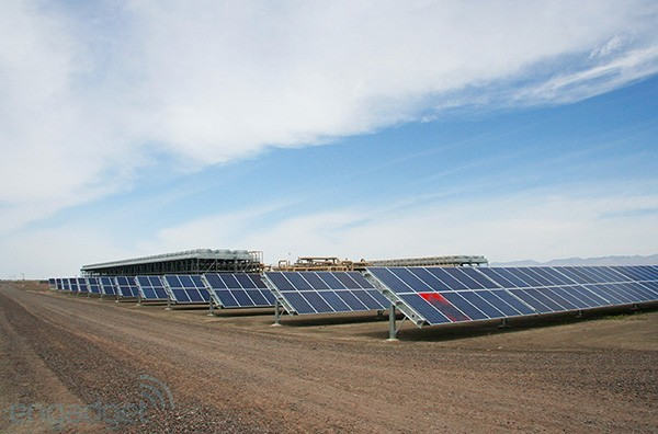 First solargeo plant blooms in Nevada's high desert